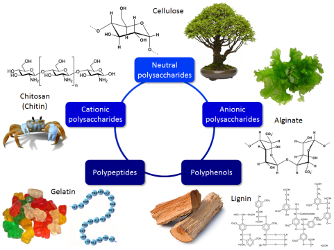 biopolymers1