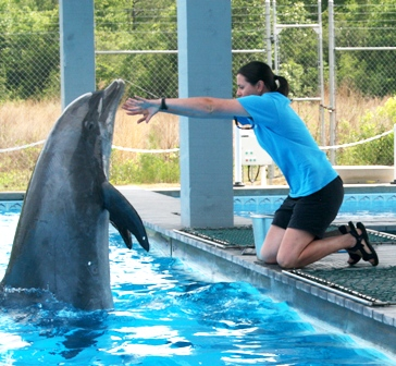 dolphinatdock